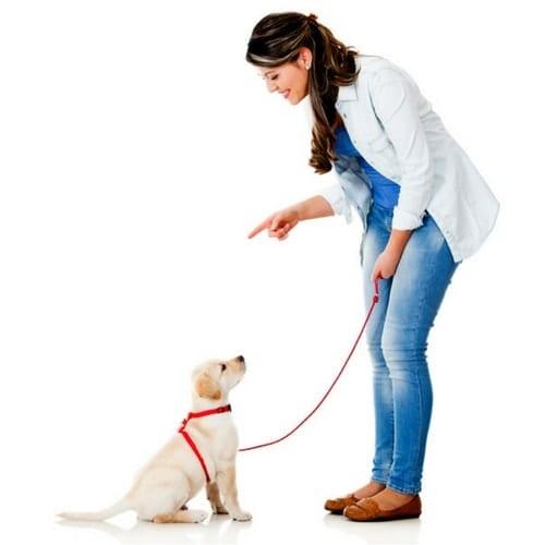 Dog Training, Savvy Perks