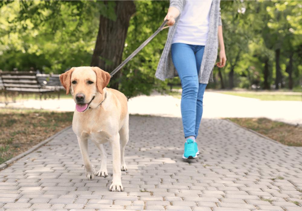 Rover.com Dog Walking
