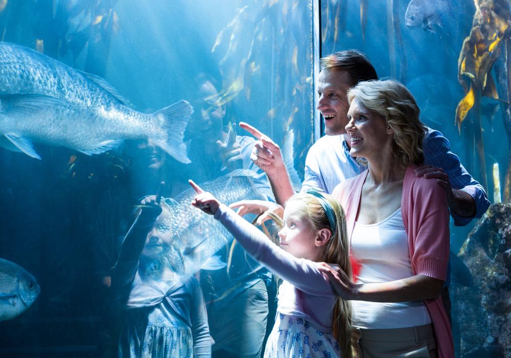 New York Aquarium At Aquarium