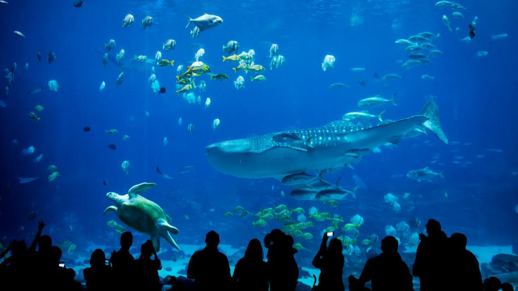 New York Aquarium Featured Image