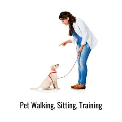 Pet-Walking-Sitting-Training-Savvy-Perks